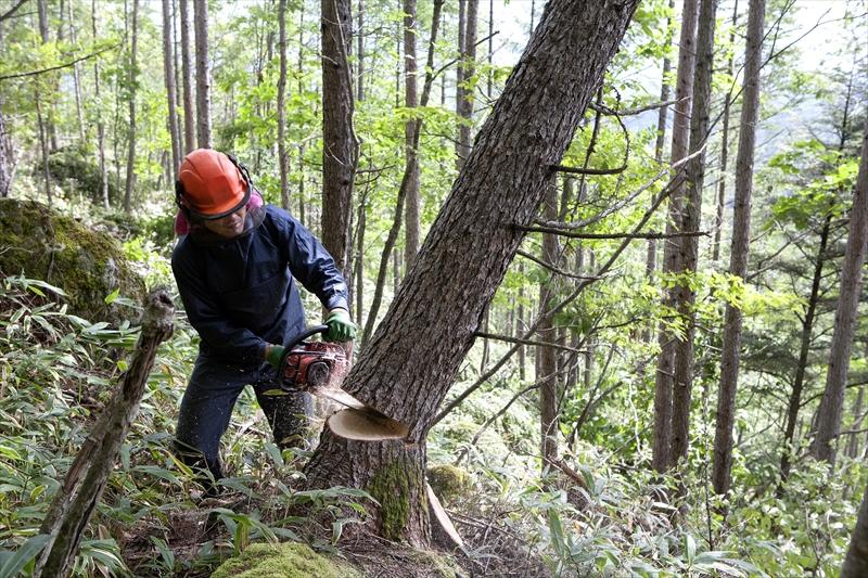 樹木の剪定・伐採はお任せ下さい!